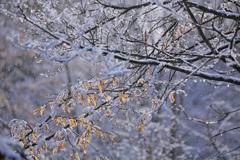 季節の変わり目 Ⅱ