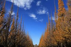 神宮外苑の秋空