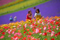 北海道 夏の思い出