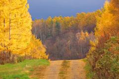 黄金の道筋