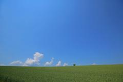 夏空間 北海道