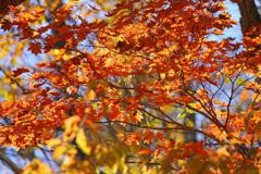 秋 いっぱい