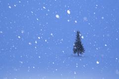 雪降る元旦