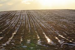 初冬の丘 Ⅱ