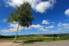 かたむ…木