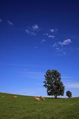 天高く牛肥ゆる秋