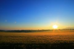 麦畑に朝が来た