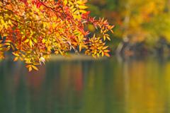 映り込んだ秋