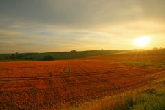 収穫を終えた丘