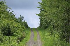 丘の先を見たい