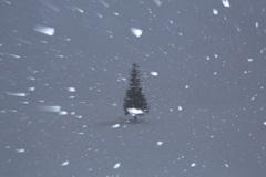 吹雪きの大晦日