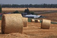 麦稈ころがる大地