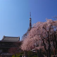 東京春爛漫