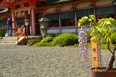 西院春日神社・嵯峨家の藤
