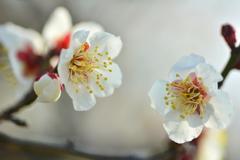 冬と春の対話