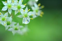 秋雨パステルグリーン
