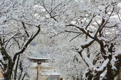 若一王子神社・雪の参道