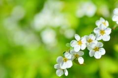 押し寄せる「春」