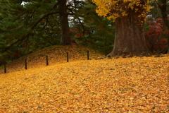 京都御苑の初冬