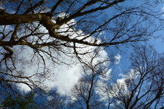 白峯神宮・冬の空