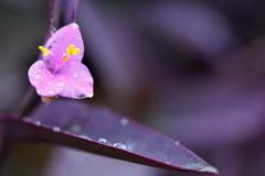 雨の日の紫御殿2