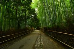 嵯峨野・竹林の道3