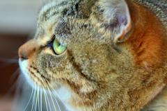 オパールの瞳
