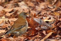 京都御苑の小鳥達4