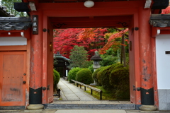 栄摂院山門の紅葉