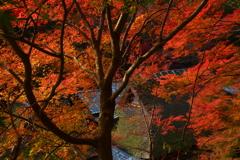嵯峨鳥居本の秋3