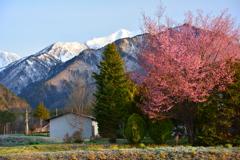 高原の春・早朝散歩2