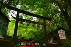 野宮神社・初夏