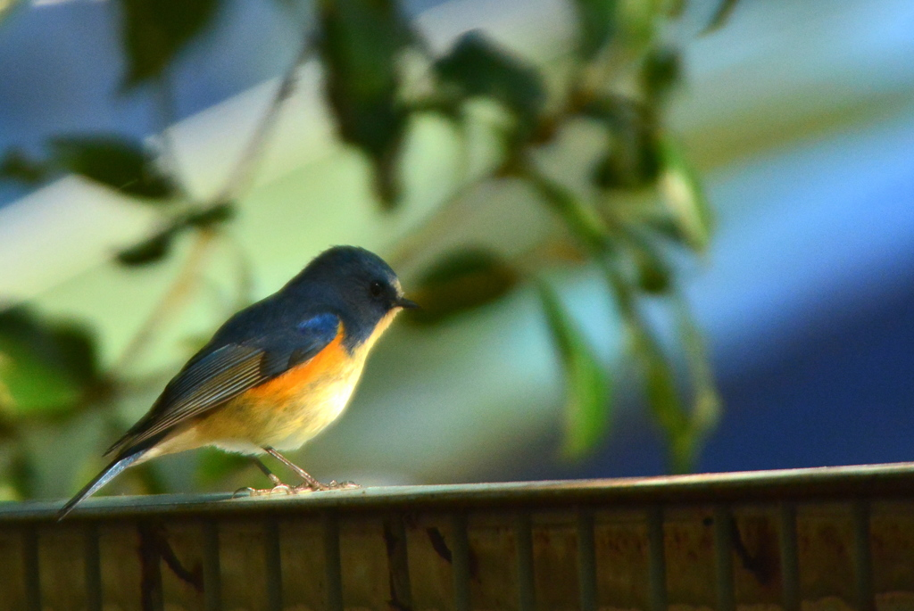 京都御苑の小鳥達2
