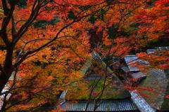 嵯峨鳥居本の秋4