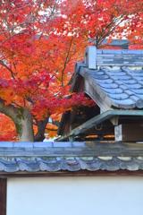 西梅津神明社の紅葉2