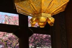 興正寺山門の紅梅