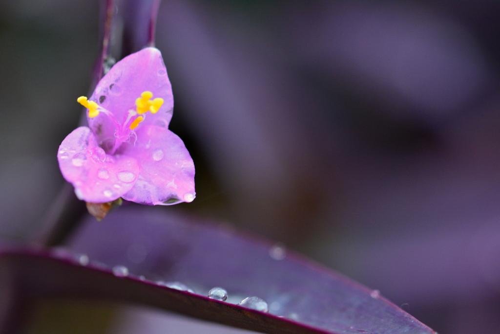 雨の日の紫御殿
