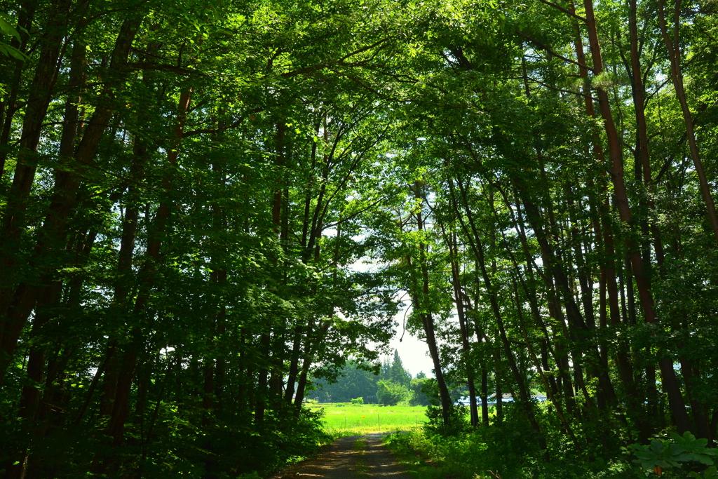 森を抜けると2