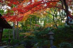 栄摂院・庭園