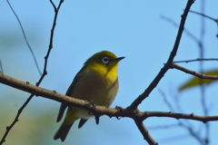 京都御苑の小鳥達1
