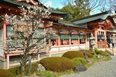 西院春日神社の白梅2