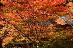 鮎の宿・つたやの紅葉2