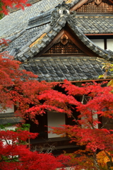 龍光院の紅葉