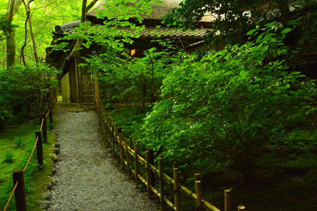 梅雨の祇王寺2