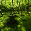 木漏れ日の祇王寺
