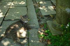 母猫の優雅な攻防