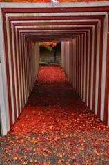 人形の家の紅葉トンネル