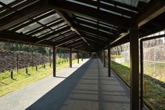 京都コンサートホール・遊歩道
