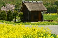 新行高原の春2