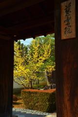 妙心寺慈雲院山門の花